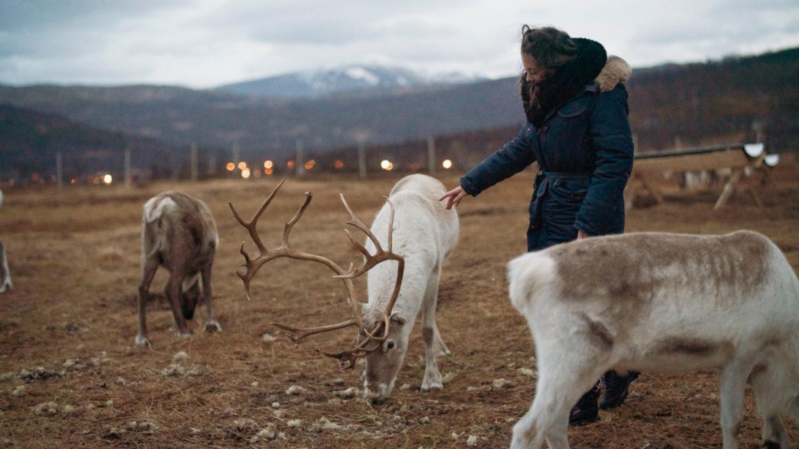 Norvège : passage dans la capitale des aurores boréales