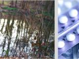 Endométriose & Pilule en continu : mon expérience